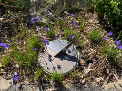 Aristea-around-the-sundial