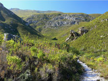 fernkloof natire reserve small