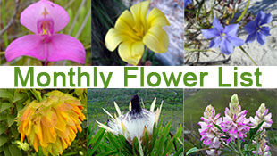 monthly flower list